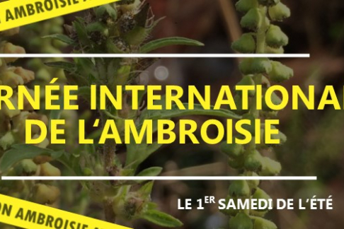 Journée internationale ambroisie